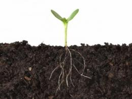 Seedling with soil cut away