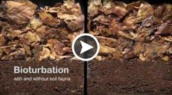 Bioturbation with and without soil fauna