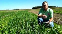 Super Soil Builder Cover Crop Mix